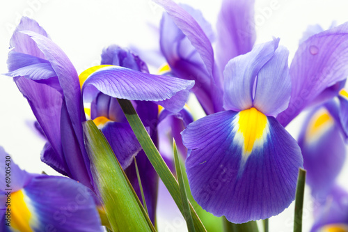 Deurstickers Iris violet yellow iris blueflag flower on white backgroung