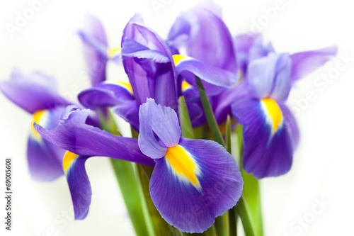 Spoed Foto op Canvas Iris violet yellow iris blueflag flower on white backgroung