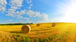canvas print picture - On a farm