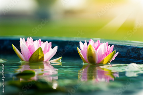 Poster de jardin Nénuphars A beautiful pink waterlily or lotus flower in pond