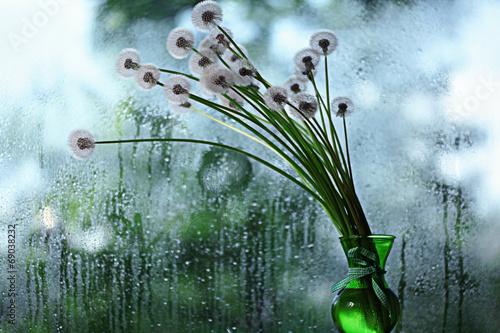 dandelions in white vase on the window