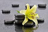 Fototapeta Kamienie - Żółta lilia z kamieniami bazaltowymi