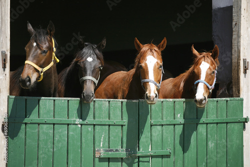 Nice thoroughbred foals in the stable.