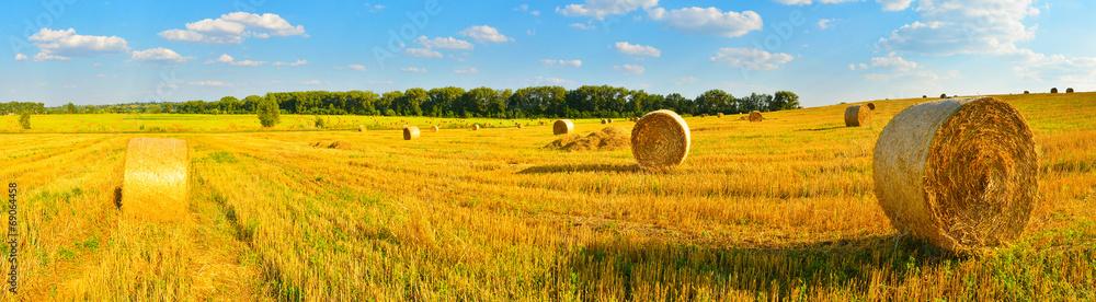 Fototapety, obrazy: Harvest background