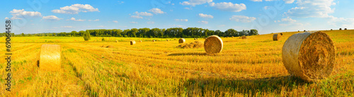 Fotografia  Harvest background