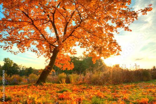 Poster Oranje eclat Beautiful autumn tree with fallen dry leaves