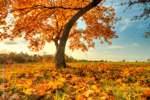 Recess Fitting Autumn Beautiful autumn tree with fallen dry leaves