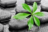 Fototapeta Kamienie - Liść z kamieniami bazaltowymi