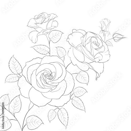 biala-roza-na-bialym-tle