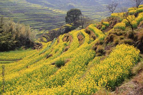 Fotobehang Zwavel geel spring landscape China