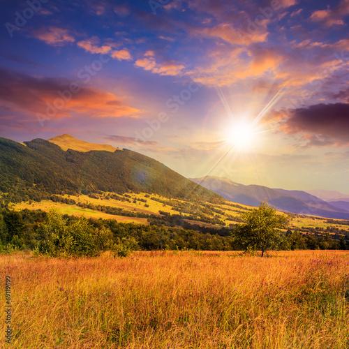 Foto auf Gartenposter Landschappen trees near valley near a mountain foot at sunset