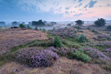 misty morning on heatherland - 69120634