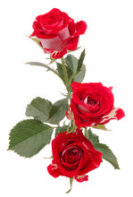 Red Rose Flower Bouquet Isolat...