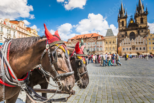 Fototapety, obrazy: Horse Carriage waiting for tourists at the Old Square in Prague.