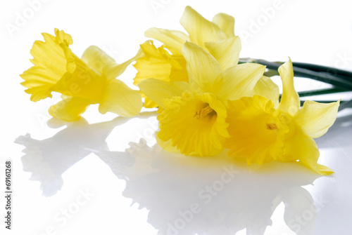 Garden Poster Narcissus beauty, narcissus, decoration, flower, fresh, yellow