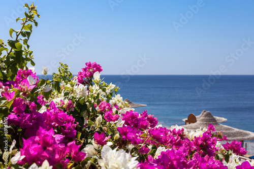 Sea Bougainvillea And Beach Umbrella