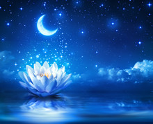 Waterlily And Moon In Starry N...