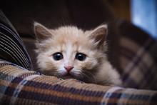 Scared Kitten