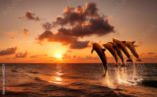 In de dag Dolfijn beautiful sunset with dolphins jumping