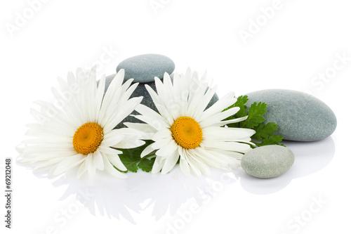 daisy-kwiat-rumianku-i-kamienie-morskie