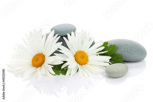 Naklejka na szybę Daisy camomile flower and sea stones