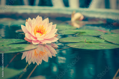 Garden Poster Lotus flower A beautiful pink waterlily or lotus flower in pond vintage photo