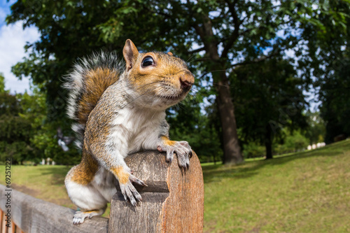 Tuinposter Eekhoorn Grey Squirrel on a park bench