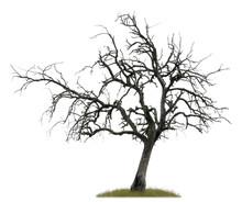 Freigestellter Toter Baum Vor Weißem Hintergrund