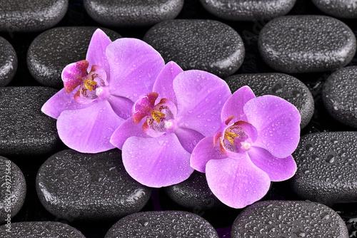 Fototapeta Storczyki na kamieniach bazaltowych obraz