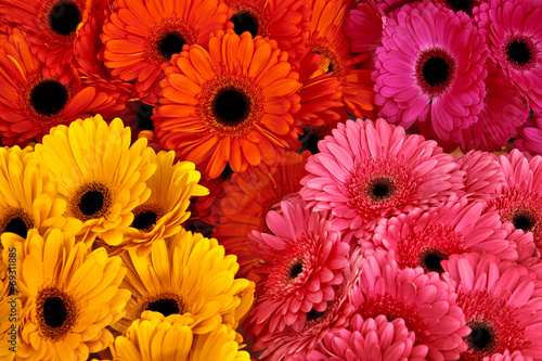 Poster Gerbera A bouquet of gerberas. Floral background.