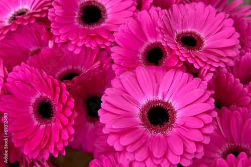 Obraz na plátně  A bouquet of gerberas. Floral background.