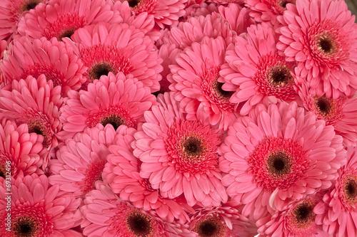 Fotografie, Obraz  A bouquet of gerberas. Floral background.