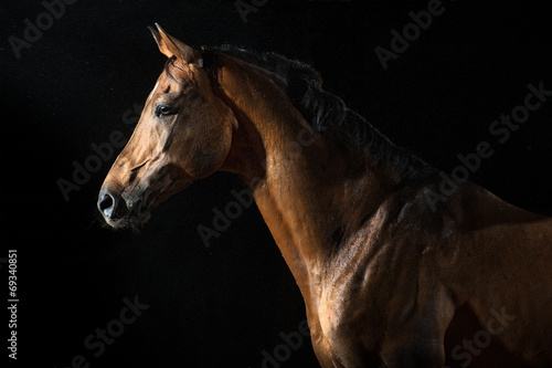 Foto op Canvas Paarden Red horse in the night under the rain