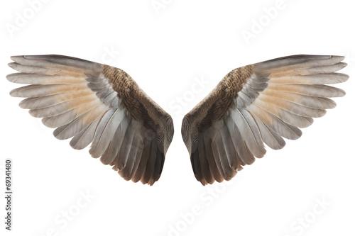 Foto  Flügel