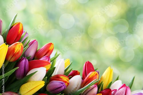 Plakat tło tulipan