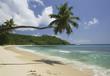 Palm tree over beach, Anse A La Mouche, Mahe', Seychelles