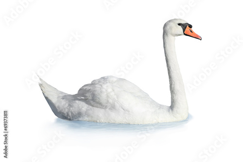 Photo sur Toile Cygne Bird swan