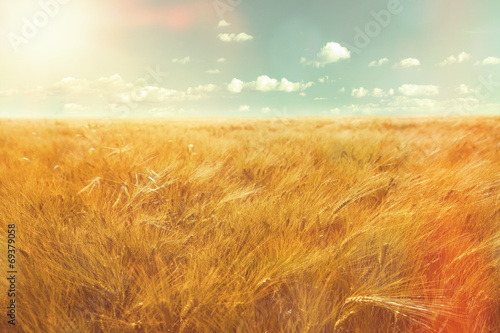 Foto barley field and sunlight