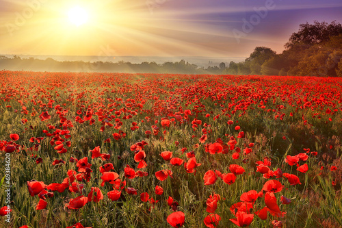 Spoed Foto op Canvas Poppy sunset over poppy field