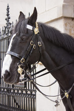 Horseguard, Londres