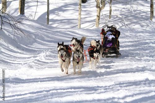 Fotografía  sleddog corsa con i cani da slitta sport invernale