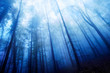 canvas print picture - Blaue Nebelstimmung im Wald