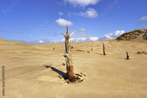 Fotobehang - Krajobraz Morski, wydmy