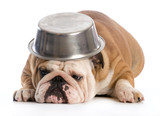 Głodny pies