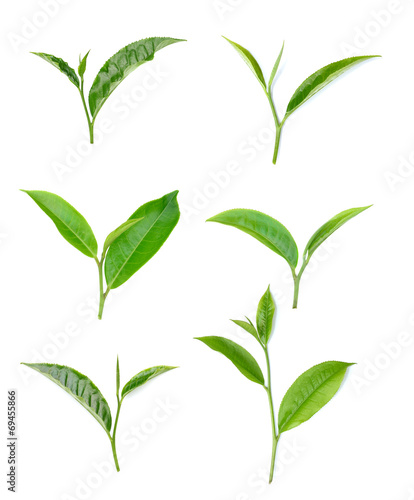 Canvas Prints Condiments Green tea leaf isolated on white background