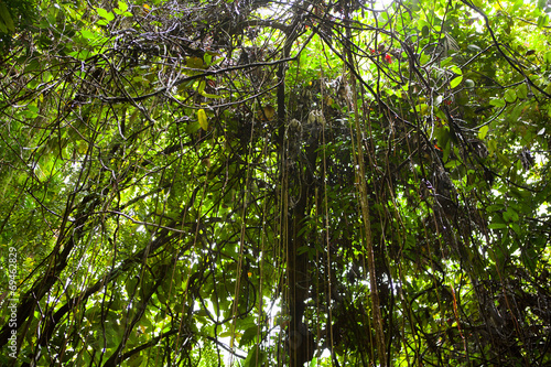 rainforest background buy this stock photo and explore similar
