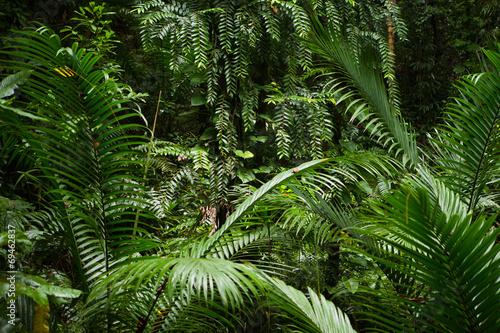 tlo-lasu-deszczowego