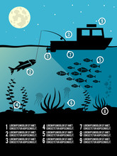 Infographic Fishing Poster