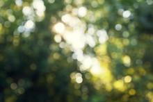 Green Bokeh In Forest