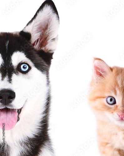 sliczne-kota-i-psa-twarze-odizolowywac-na-bielu